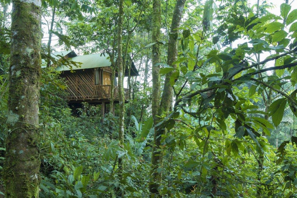 La Tigra Rainforest Lodge, La Fortuna Image 26