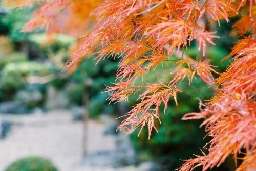 Ryokan Genhouin Kyoto Image 17