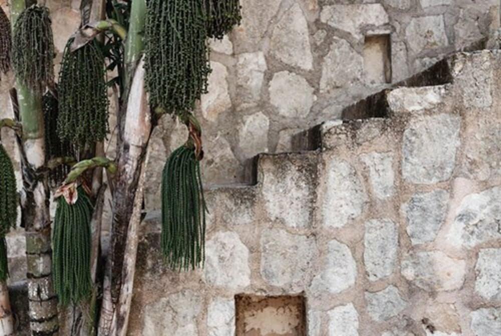 Coqui Coqui Coba Image 41