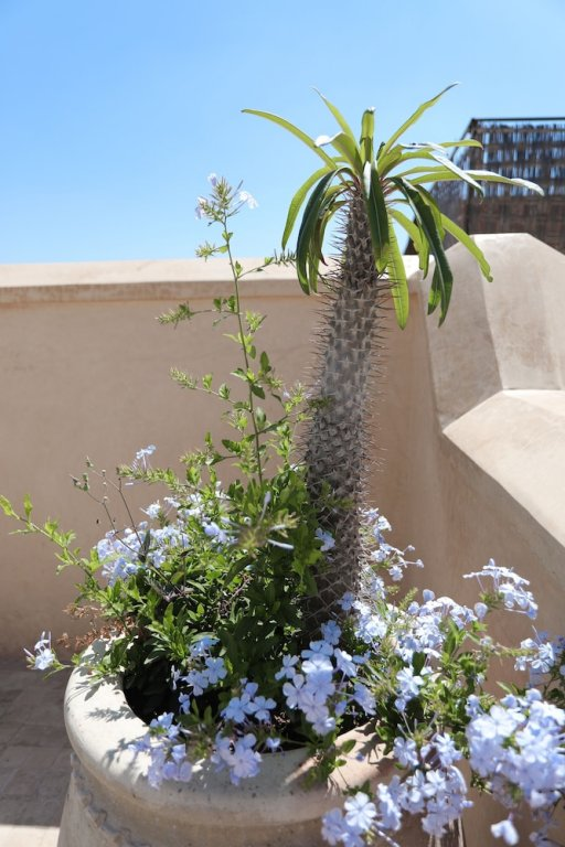 72 Riad Living, Marrakech Image 34