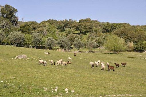 Imani Country House, Evora Image 40