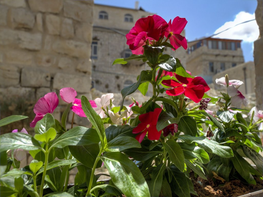 Nofesh Baatika, Safed Image 44