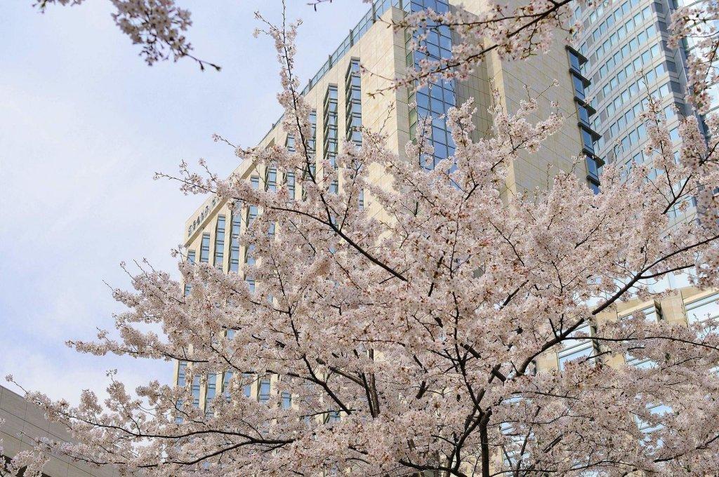 Grand Hyatt Tokyo Image 9