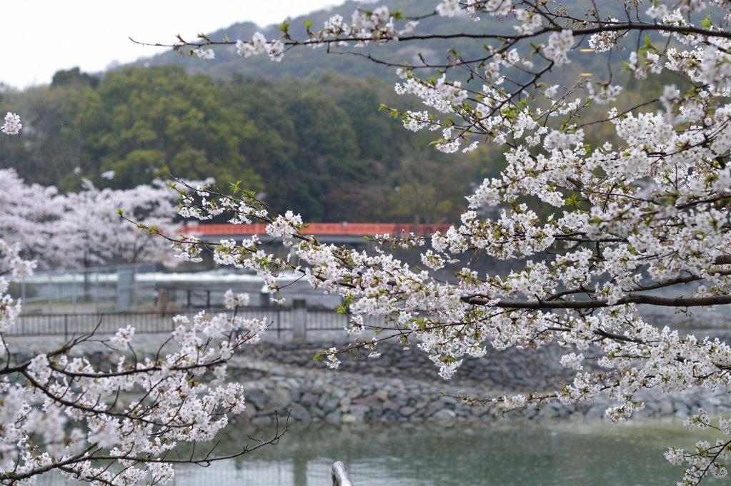 Kyoto Uji Hanayashiki Ukifune-en, Uji Image 19