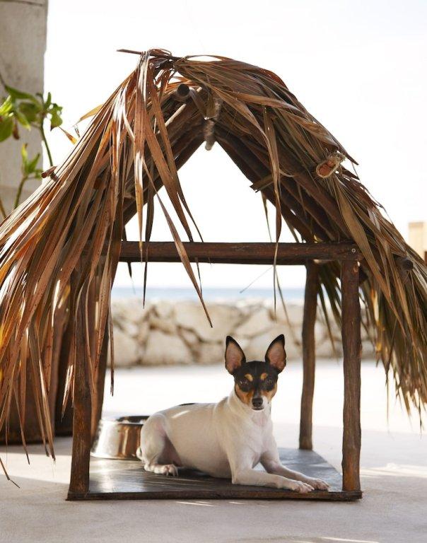 Viceroy Riviera Maya, Playa Del Carmen Image 27