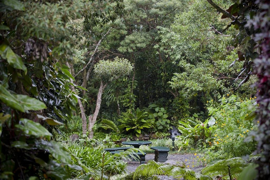 Monteverde Lodge & Gardens, Monteverde Image 38