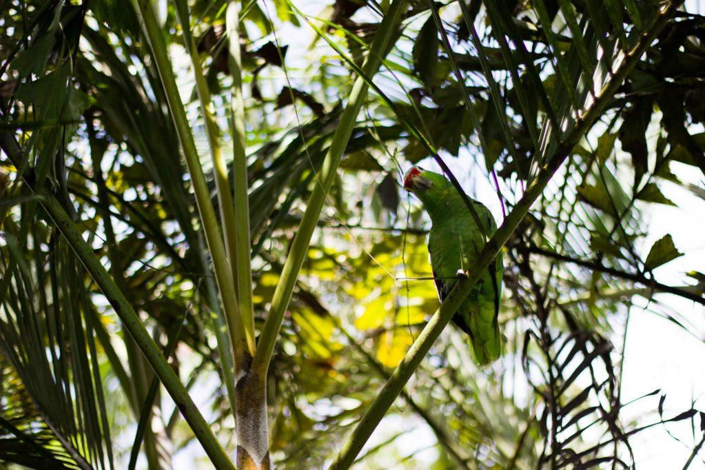 Tifakara Boutique Hotel & Birding Oasis, La Fortuna Image 19
