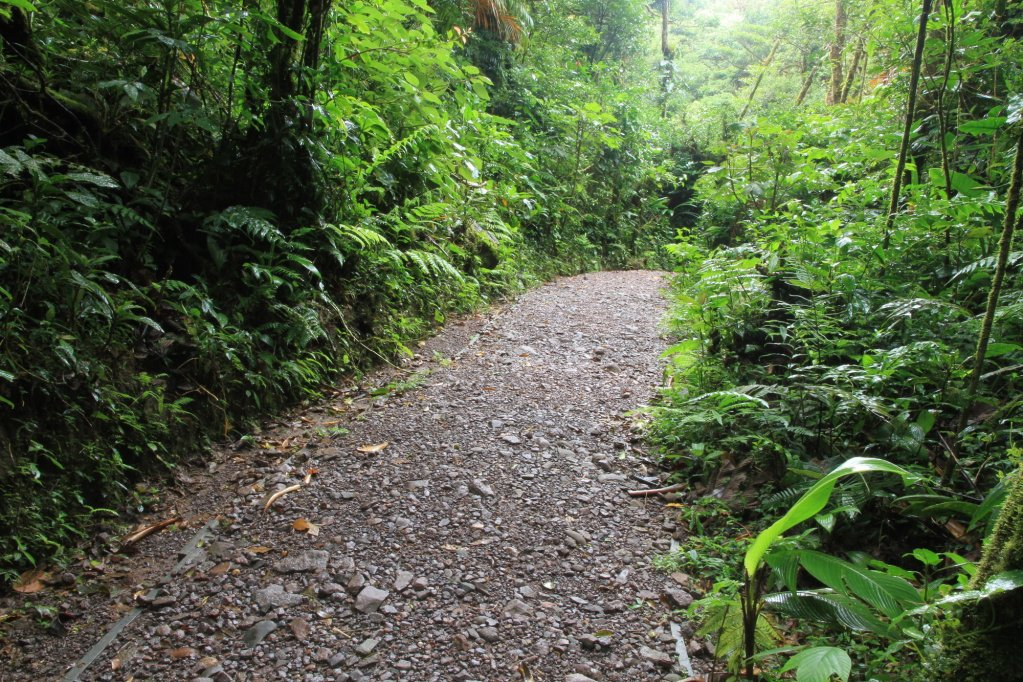 Monteverde Lodge & Gardens, Monteverde Image 46