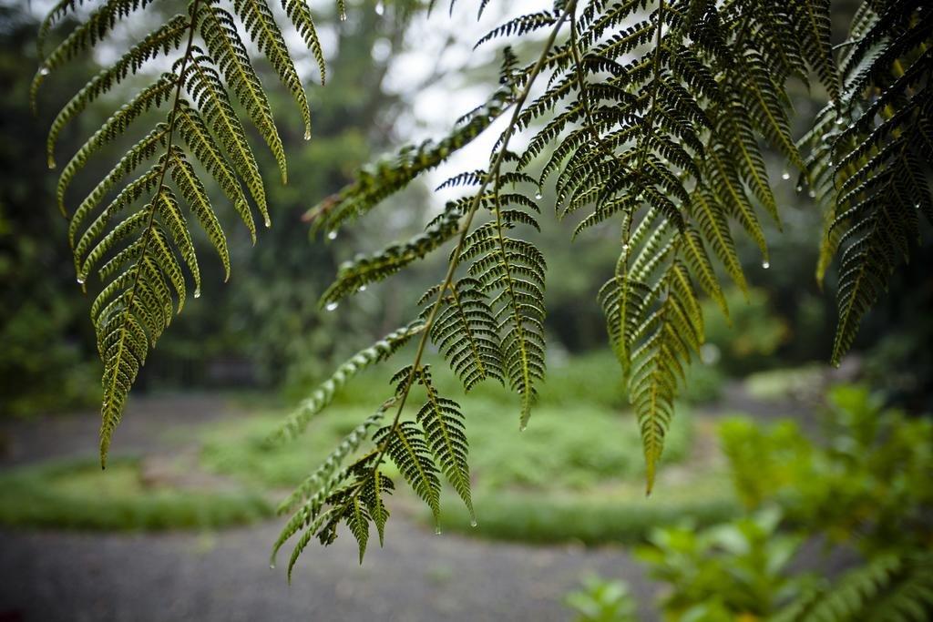 Monteverde Lodge & Gardens, Monteverde Image 40