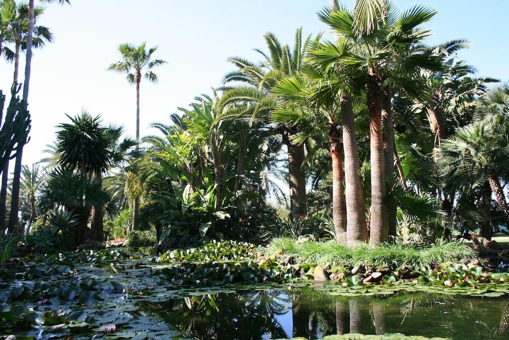 The Oasis By Don Carlos Resort, Marbella Image 10