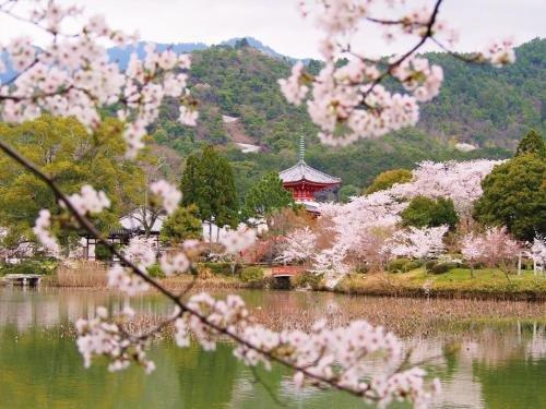 Luxury Hotel Sowaka, Kyoto Image 41