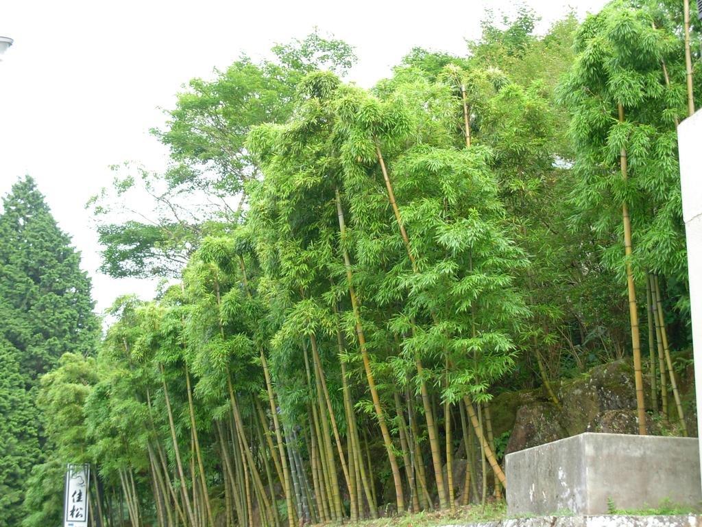 Takumino Yado Yoshimatsu, Hakone Image 35