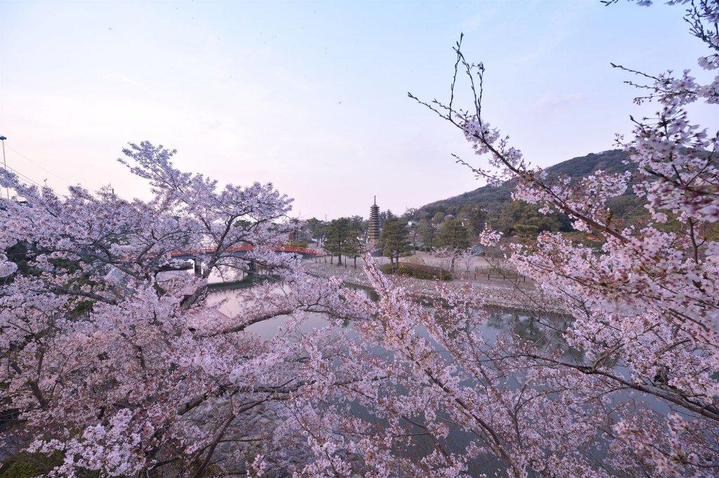 Kyoto Uji Hanayashiki Ukifune-en, Uji Image 22