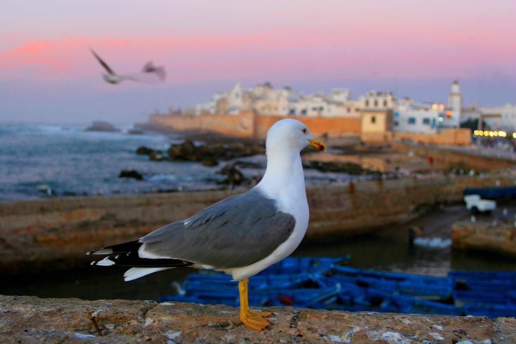 Madada Mogador, Essaouira Image 28
