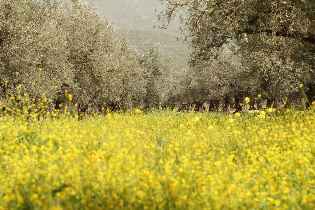 Kibbutz Moran Country Lodging Image 7