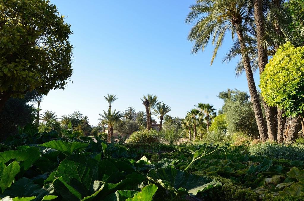 Ksar Char-bagh, Marrakech Image 23